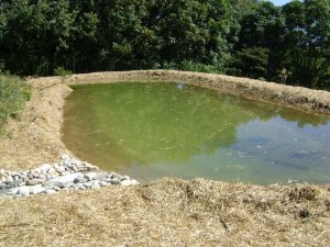 earthen pond for catfish farming in nigeria