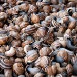 How to Start a Snail Farm in Nigeria / Snail Farming Business Plan