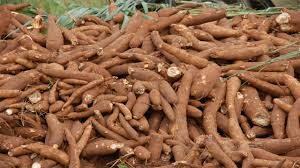 start cassava farming business in nigeria