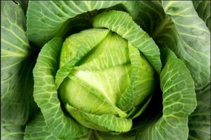 cabbage farming in nigeria