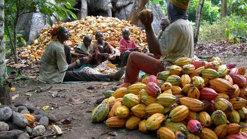 Start Cocoa Business in Nigeria