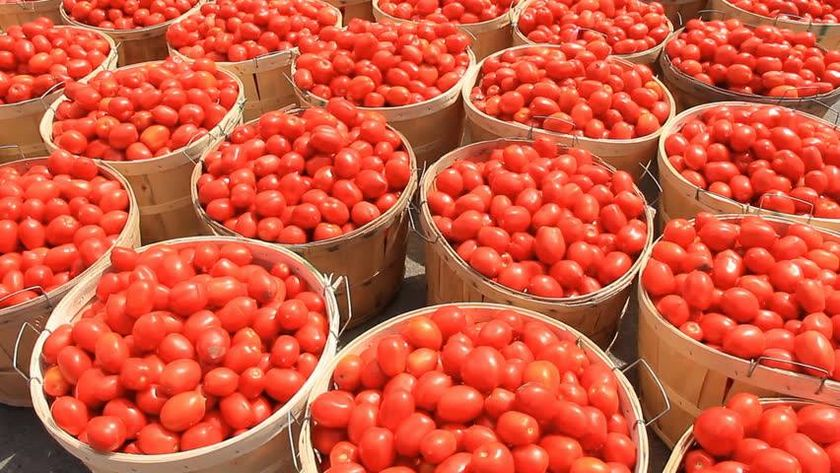 Tomato Farming Business Plan in Nigeria - Business Plan