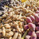 potato farming business plan in nigeria