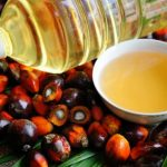 palm kernel oil production business plan in nigeria